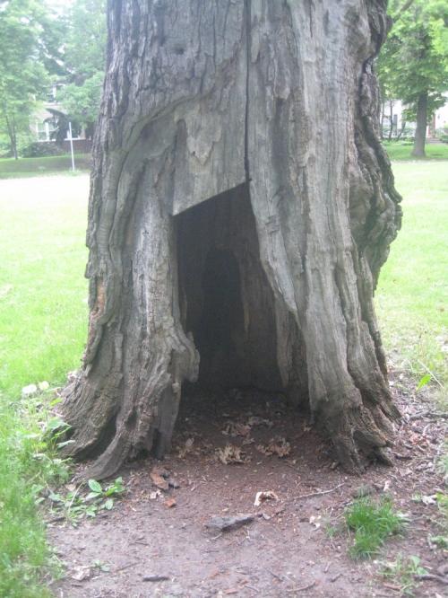 Doorway_in_to_the_oldest_tree