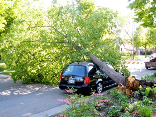 Tree_on_car_seward_wind_damage