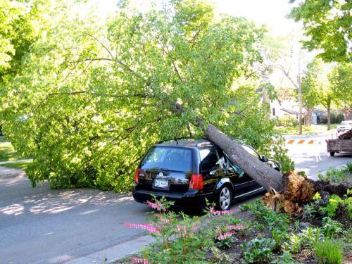 Tree_on_car_seward_wind_damage