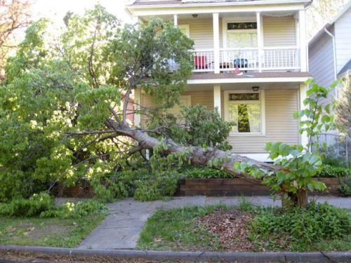 Wind_damage_in_seward_24th_ave